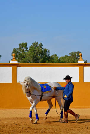 Sevilla; Isla Minima, Spain - august 26 2019 : a horse show in the hacienda near the guadalquivir river Banco de Imagens - 142094167