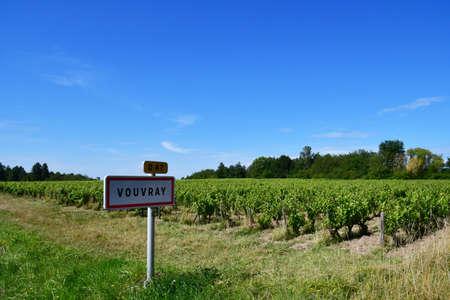 Vouvray; France - july 15 2020: the vineyard