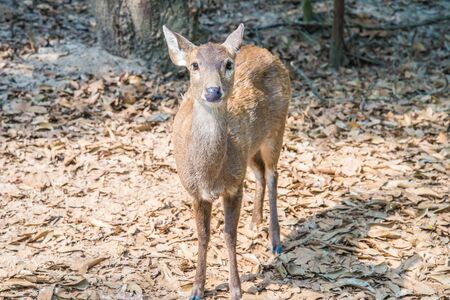 wild venison: Portrait of a young deer in the zoo.