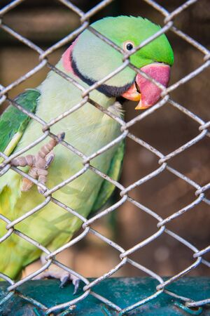 are trapped: The parrot was trapped in the cage of the zoo. Stock Photo