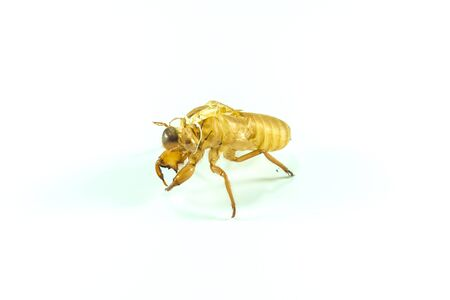 molting: Molting insects on white background. Stock Photo