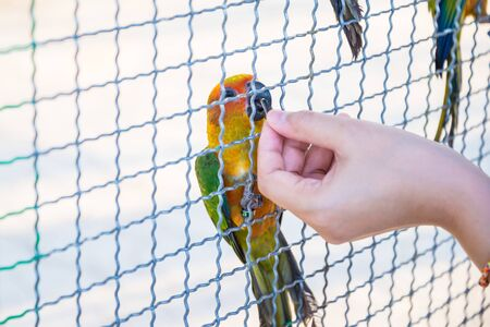 trapped: The parrot was trapped in the cage of the zoo. Stock Photo