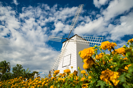 pot marigold: Windmills and fields of marigolds, Flower and cloudy bluesky.