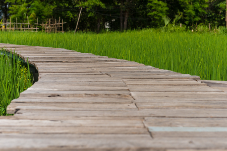Wooden walkway in the fields