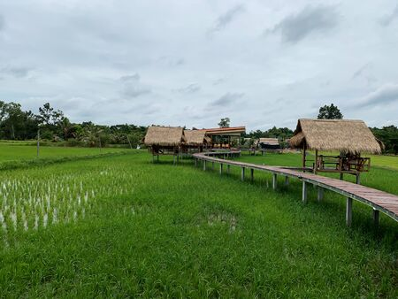 Wooden walkway among rice fields in Thailand. Imagens