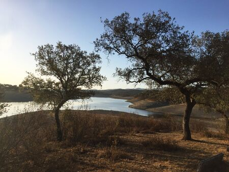 Holm oaks at the edge of a water reservoir luz del amanecer