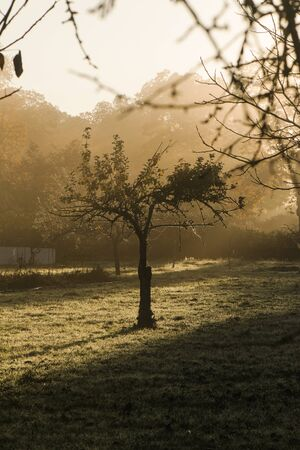Tree between fog and first light of dawn natural light Banque d'images
