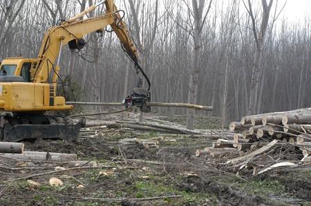 LOGGING OF TREES IN VEGA GRANADA TO GET WOOD Stock Photo - 3967231