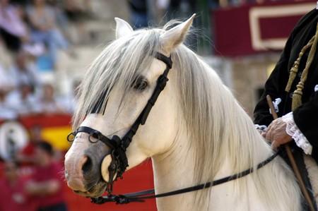 reins: Horse in bull run