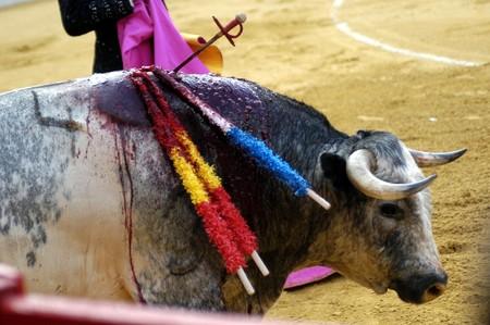 Bulls in bull run