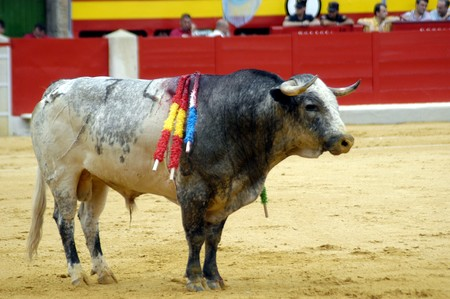 Bulls in bull run photo