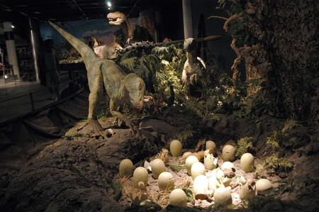 Carnivorous dinosaurs photo