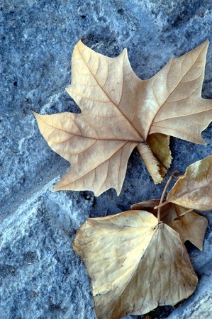 Dried leaves in autumn photo