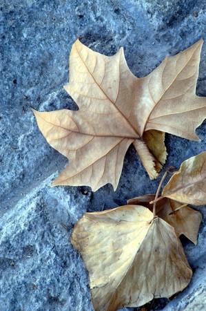 bodegones: Hojas secas en oto�o Foto de archivo