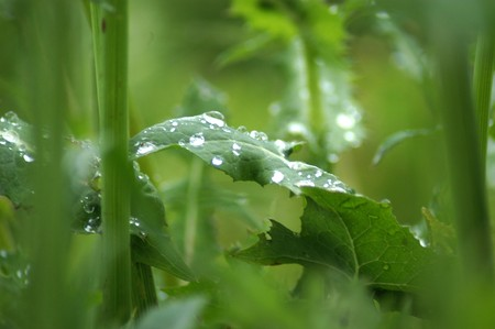RAIN DROPS IN PLANTS  photo