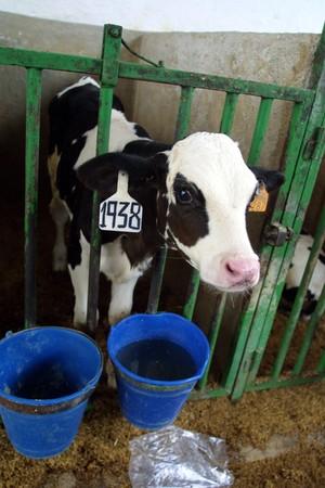 cooperativa: Cooperativa agr�cola de leche de vaca