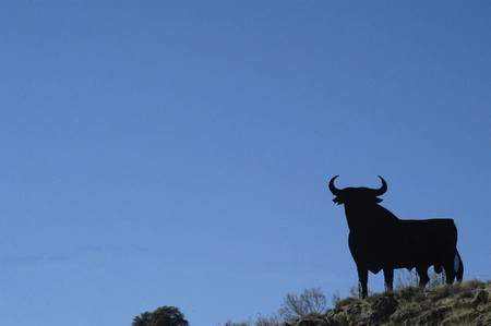 national identity: THE BULL  BECOME THE SYMBOL OF NATIONAL IDENTITY OF SPAIN Stock Photo