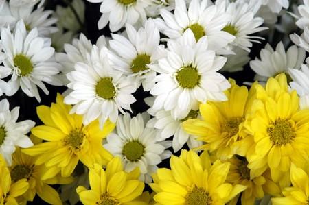 Texturas y fondos de las flores Foto de archivo