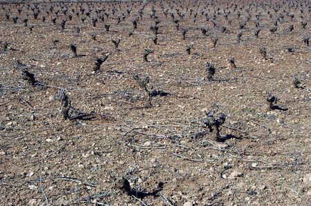 strains: Strains of vineyards in the Sierra Nevada National Park
