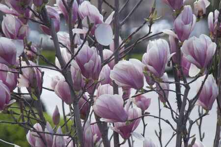 fondos violeta: Arbusto con flores violeta