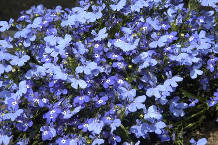 fondos violeta: Flores silvestres en un jardín en el pantano de Cubillas Granada