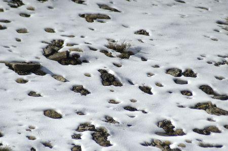 sierra snow: Texture of snow in Sierra Nevada