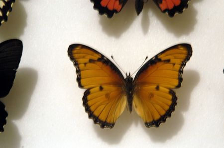 adjective: Butterfly