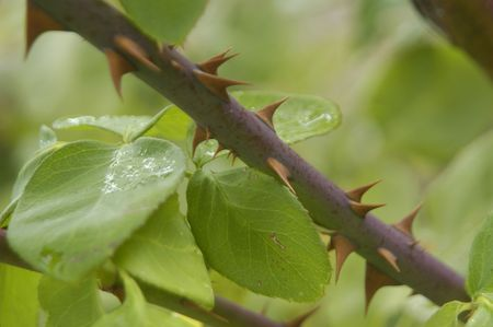 Drops of rainwater and dew on plants photo