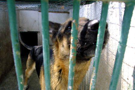 Perros abandonados en la protección de los animales Granada