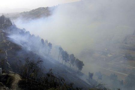 forest fire: Incendio forestal