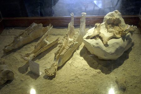 stratigraphy: Orce archaeological museum in the province of Granada
