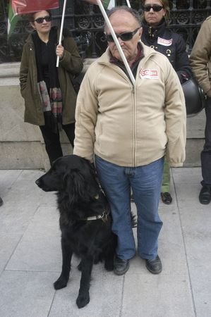 guide dogs for the blind in a workers' demonstration of the once 10/03/2010 Stock Photo - 9587936