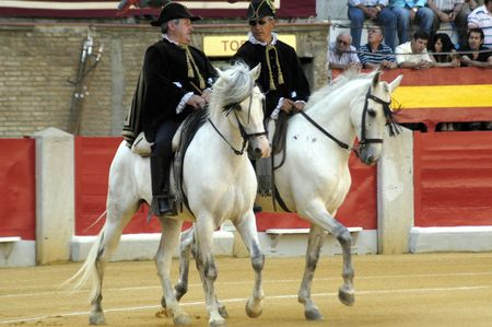 Andalusian Horse Alguacilillo the bullfight held in Granada on 3 June 2007, at Feria de Corpus