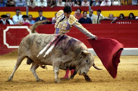 bull rings: The bullfighter Sebastian Castella in the bullfight held in Granada on 7 June 2007, at Feria de Corpus