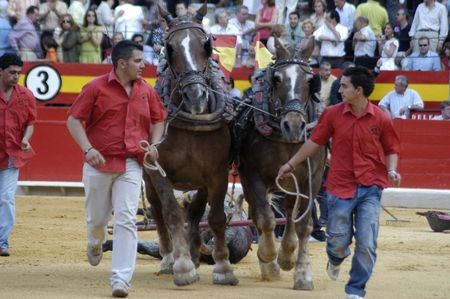matadors: Drag the bull with horses in the bullring in Granada (Spain) in the bull Corpus Fair June 2007