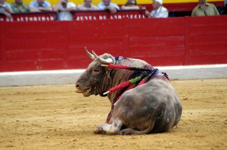bull rings: Bull in the bullring in Granada (Spain) in the bull Corpus Fair June 2007 Editorial