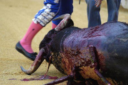 matadors: bull in the bullring in granada (spain) in the bull corpus fair june 2007