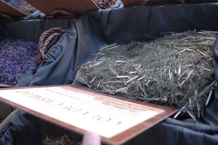 equisetum: Spices and Herbs - Equisetum bogotense