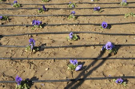 irrigation: drip irrigation