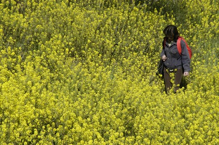 a woman in a field of flowers photo