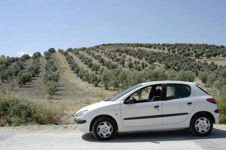 Andalusian olive groves photo