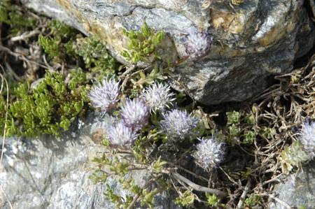 endemic: Endemic Plants in Sierra Nevada