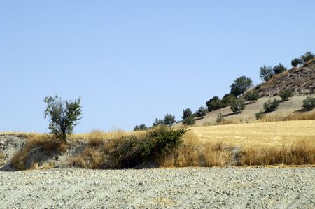 pinar: Dry stubble in the town of Pinar, in the province of Granada, in the region of the Eastern Mountains. Stock Photo