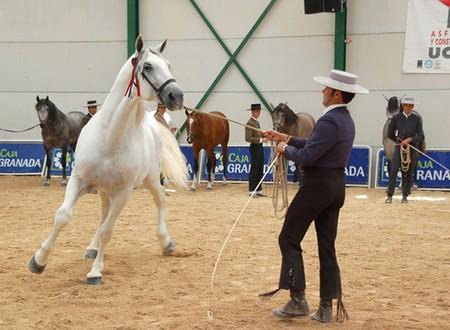 fiesta popular: 20091004 Granada-Spain-Horses in the popular festivals of Granada Albaicín