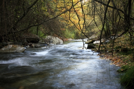 Sierra Nevada forest, river, river Genil photo