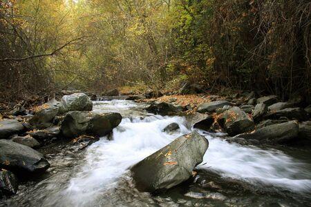 sierra nevada forest, river, river genil photo