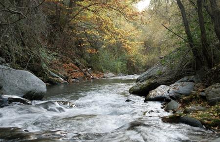 Bosque de Sierra Nevada, el río Genil Foto de archivo - 8988014