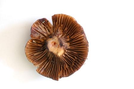 mushrooms in nature photo