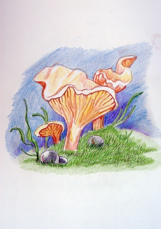 Omphalotus olearius - Pleurotus Olearia Stock Photo - 8714944