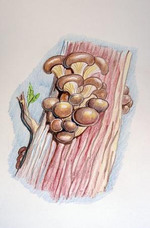 Mycology Stock Photo - 8661256